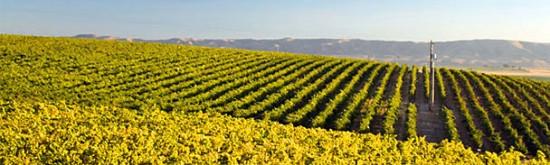 Vineyards in Stillwater?
